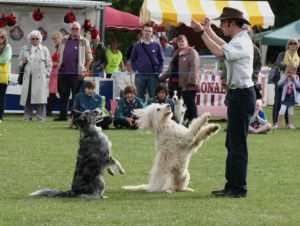 hire dancing dogs shows