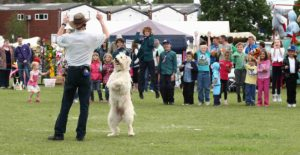 hire dancing dog shows