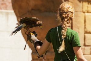 hire falconry display