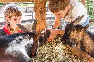 hire petting farms
