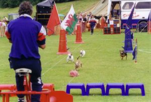 hire terrier racing shows